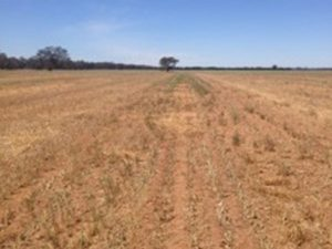 Dry finish in western Victoria