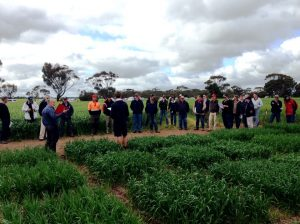 Durum wheat field trial