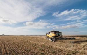 wheat harvest WA