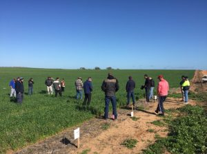 Growers visiting Imtrade Trials
